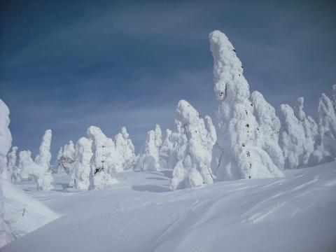 樹氷 阿仁スキー場